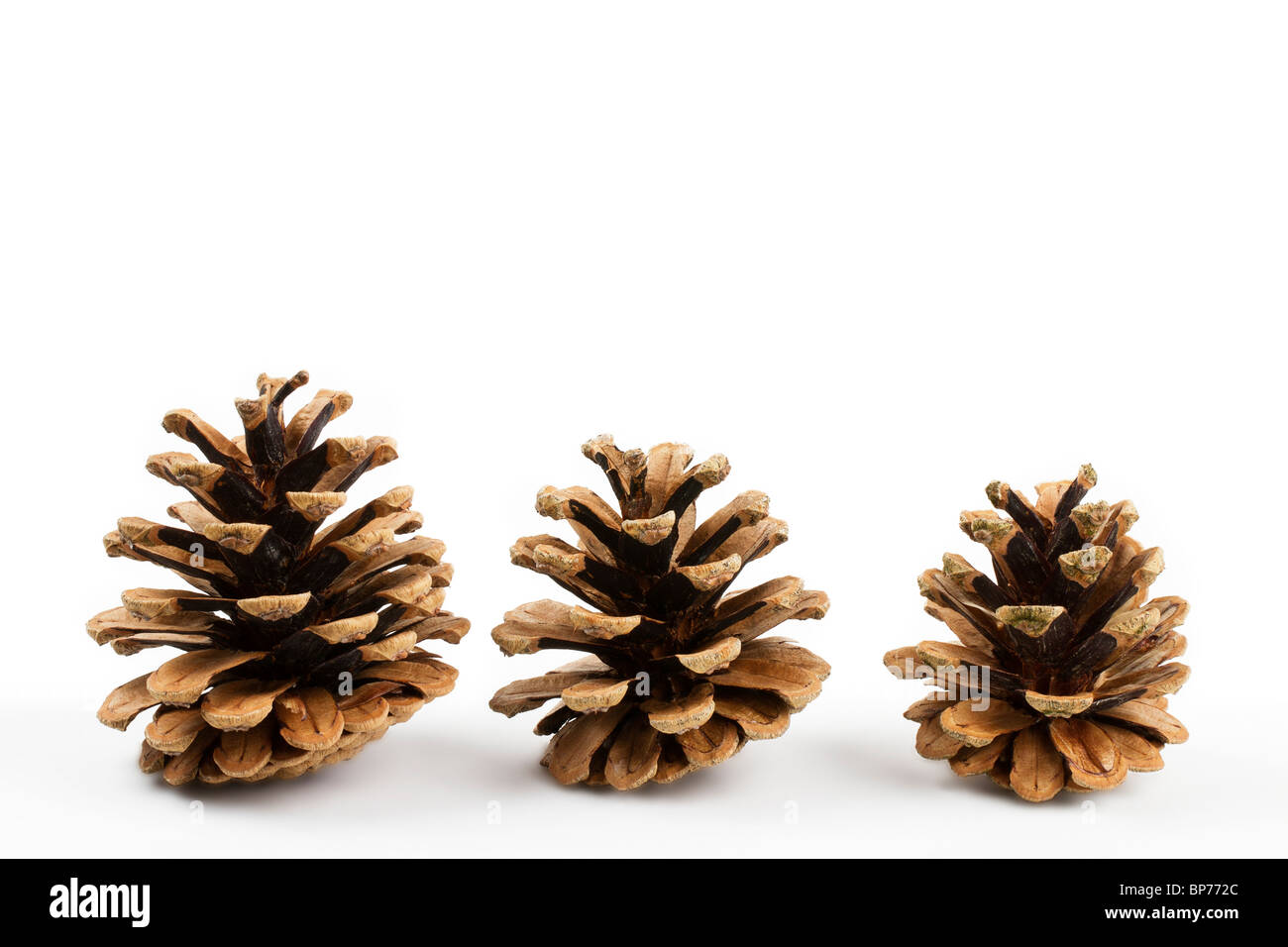 three pine cones isolated on white background - Stock Image