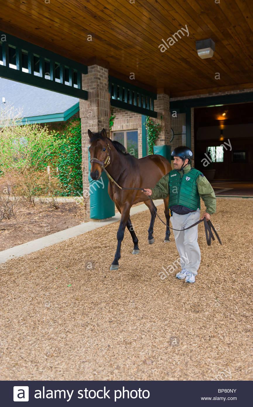 Spring At Last (stallion), Winstar Farm (thoroughbred horse farm), Versailles (near Lexington), Kentucky USA - Stock Image