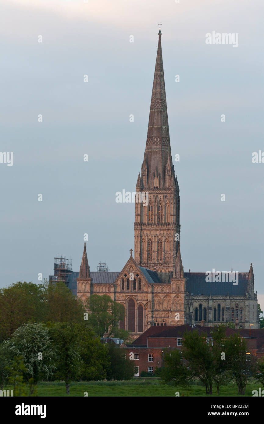 Salisbury Spire at Sunset. The last rays of a setting sun cast a warm glow on the stone of the high spire of the - Stock Image