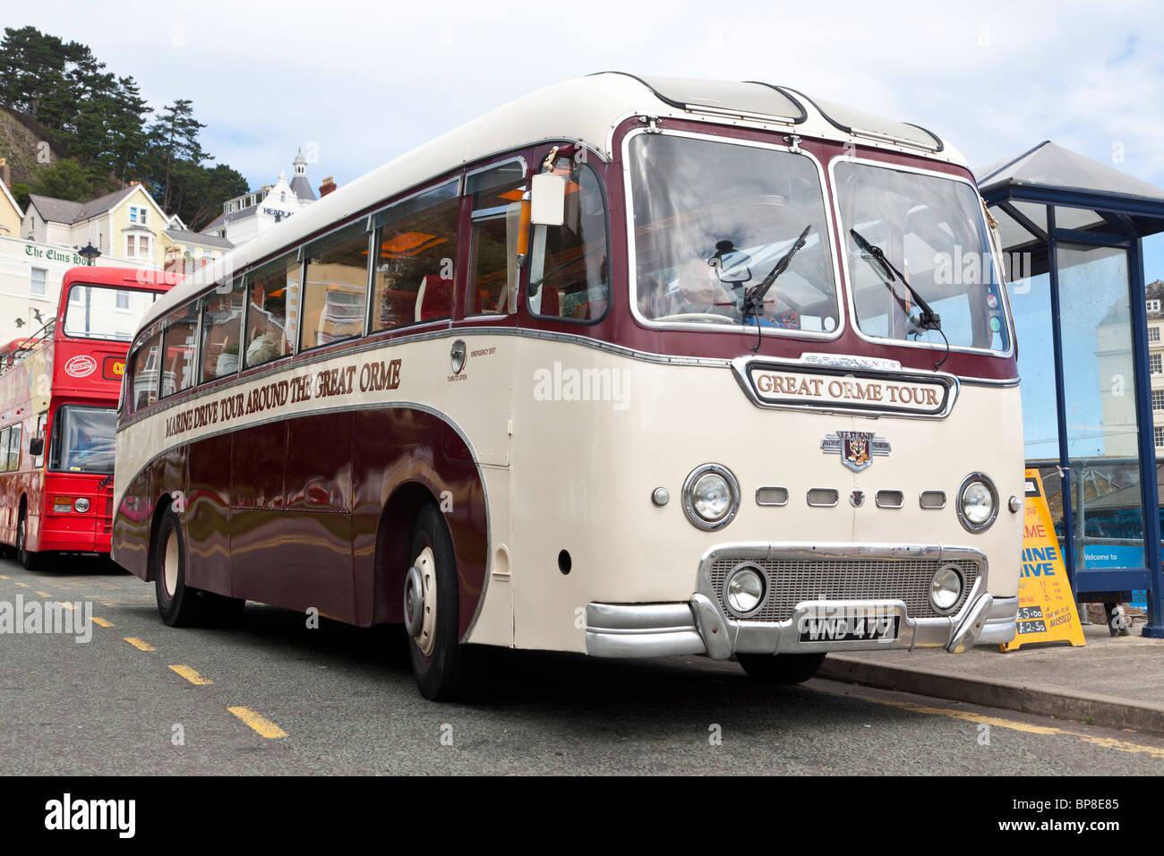 Great Orme Tour, 1950s Leyland bus, Llandudno, North Wales - Stock Image