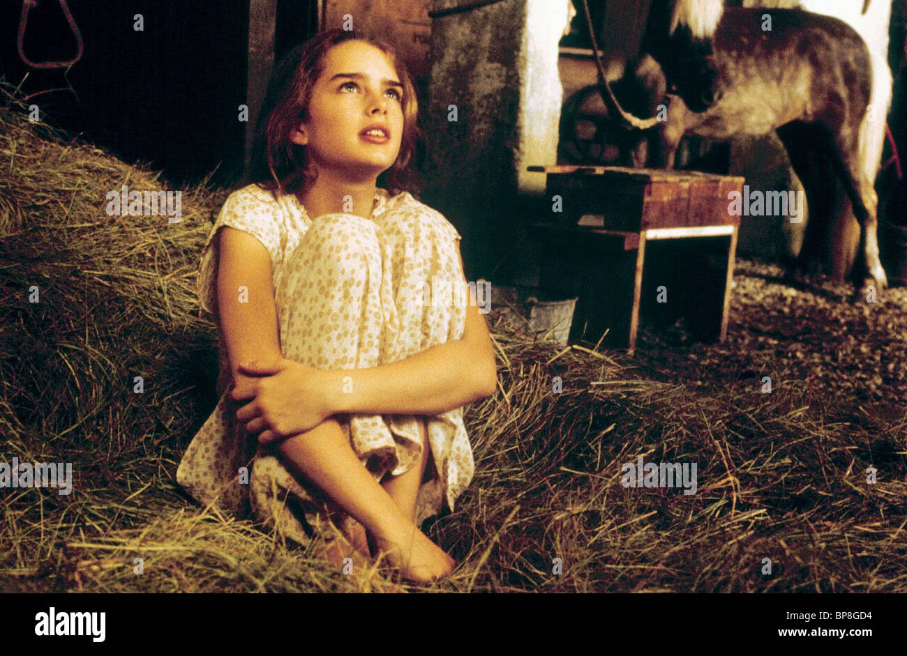 pretty baby 1978 download