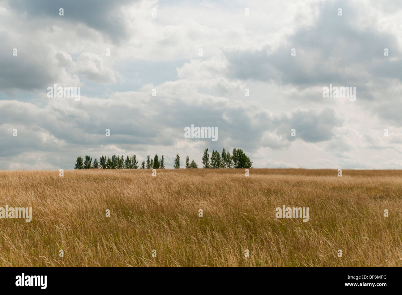 Hay field and trees in summertime. - Stock Image