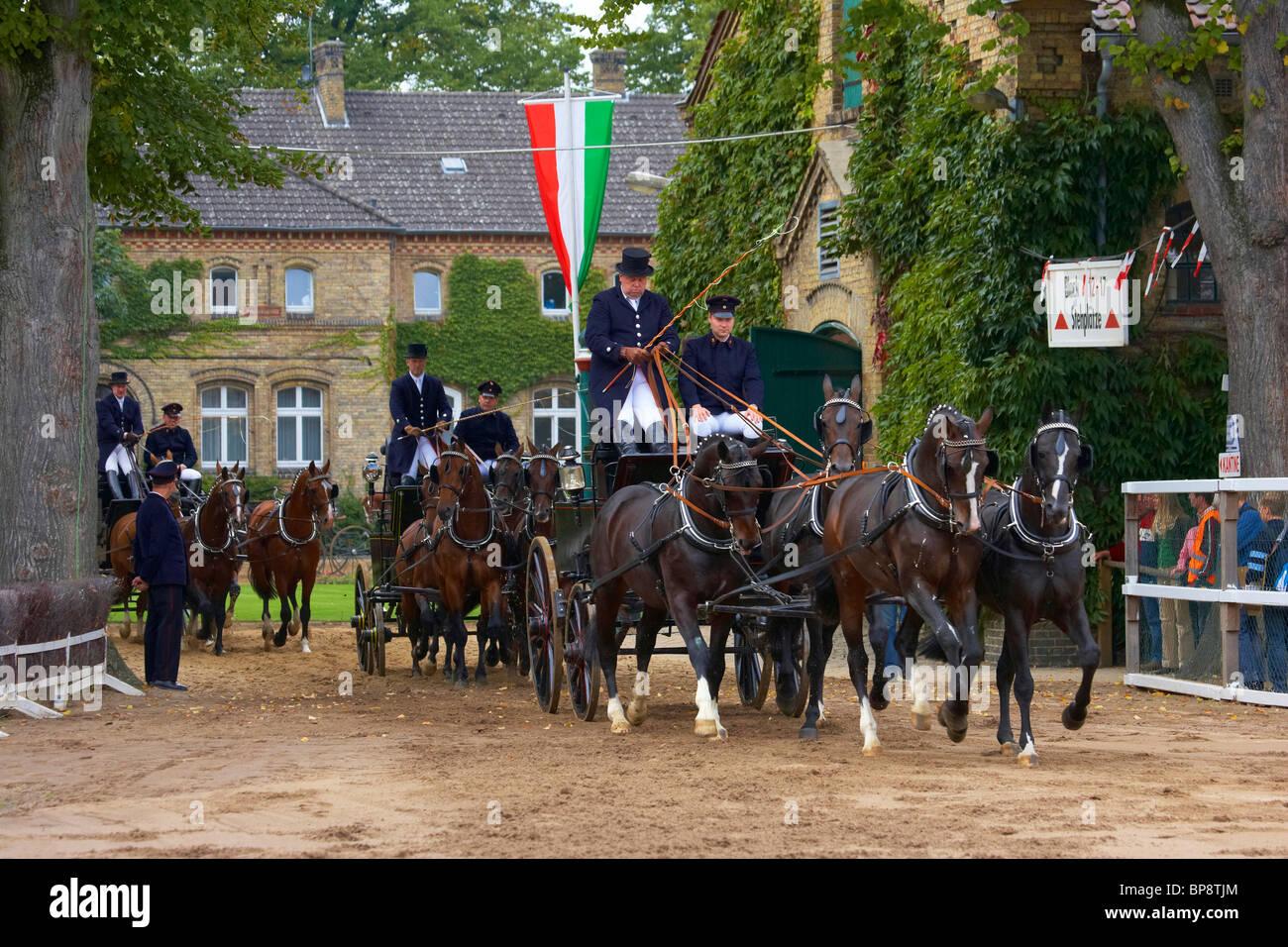 Outdoor photo, Stallion Parade, State Stud, Warendorf, Muensterland, North Rhine-Westphalia, Germany, Europe - Stock Image