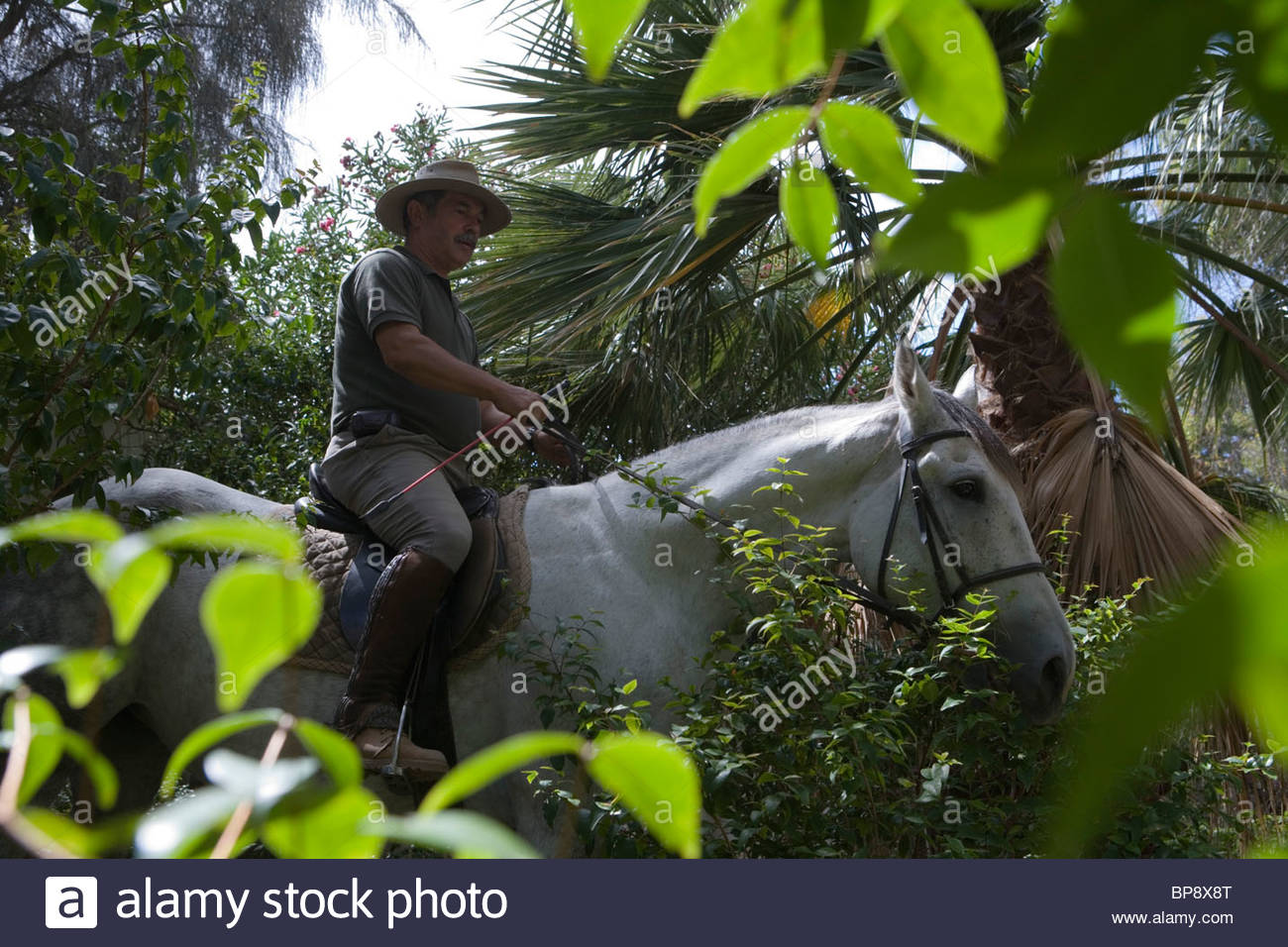 Man on horseback at the Centro Hipico Equestrian Center, Ponta, Porto Santo, near Madeira, Portugal - Stock Image
