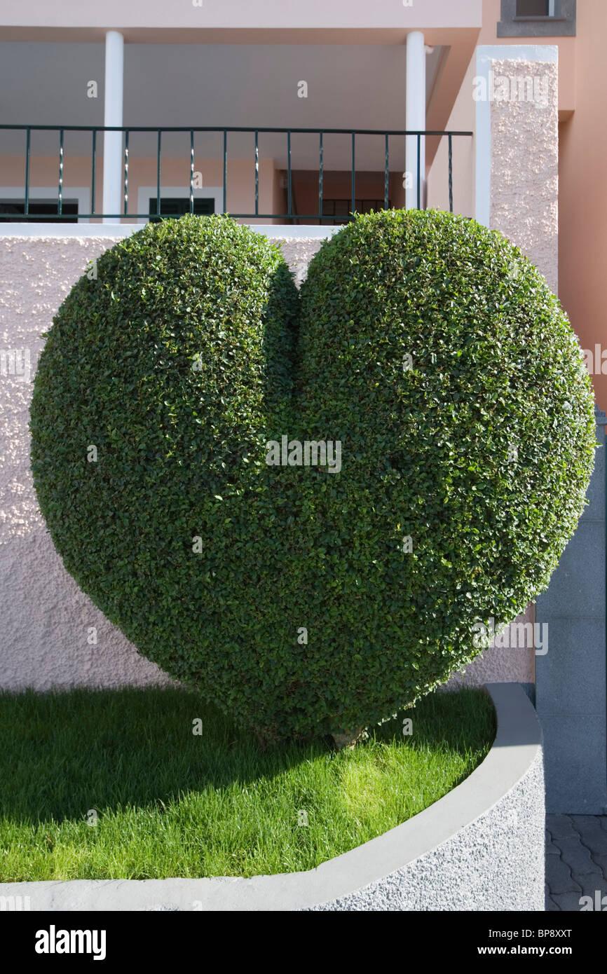 Heart shaped bush, Estreito de Camara de Lobos, Madeira, Portugal Stock Photo