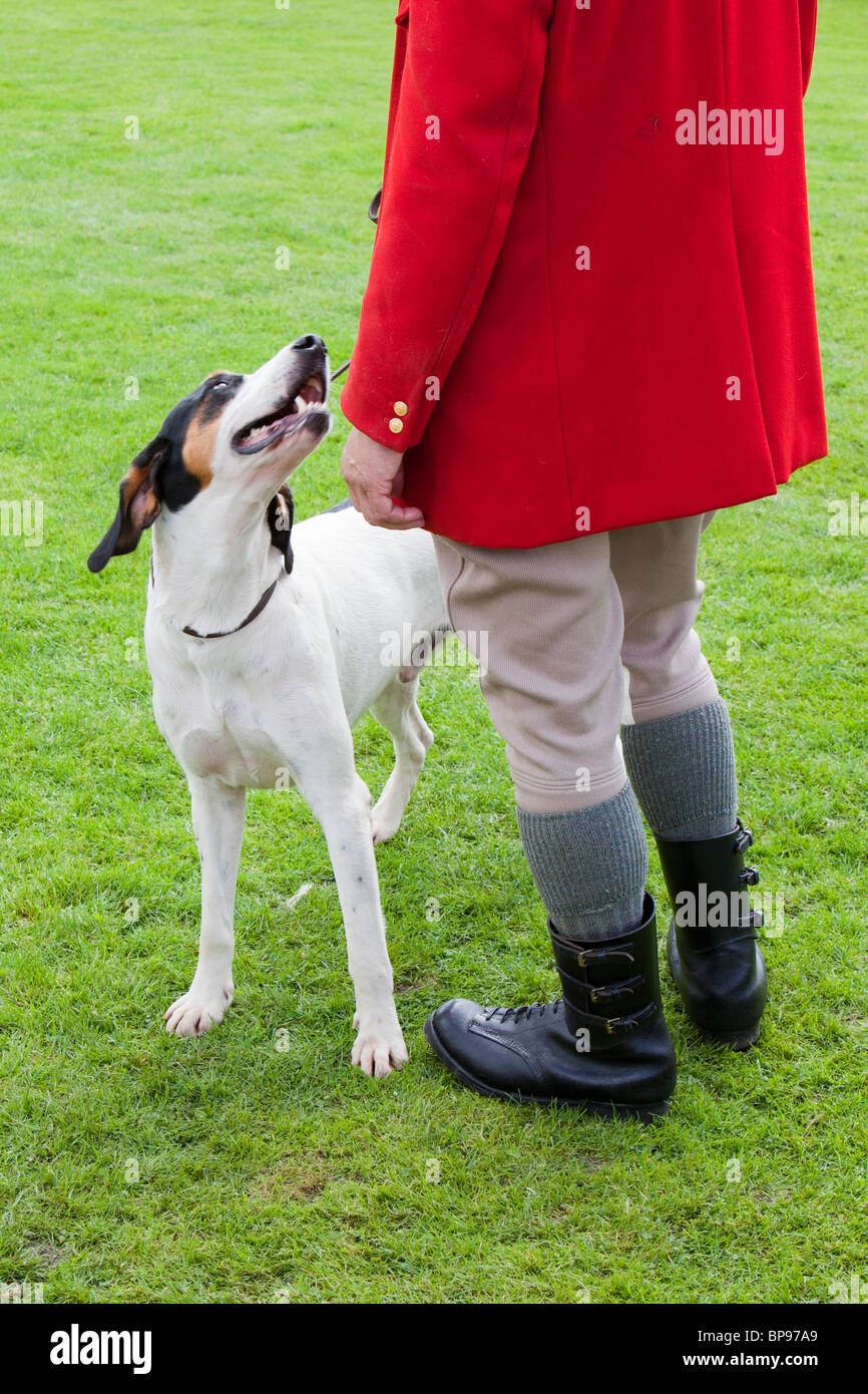 A Hunt master and his fox hound at the Vale of Rydal Sheepdog Trials, Ambleside, Lake District, UK. - Stock Image