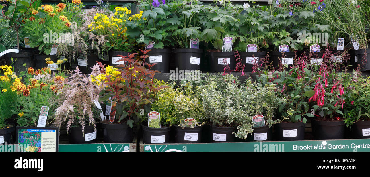 Mixed shrubs and herbaceous plants on display. Euonymus fortunei, winter creeper, Helenium Goldfield, Photinia Red - Stock Image