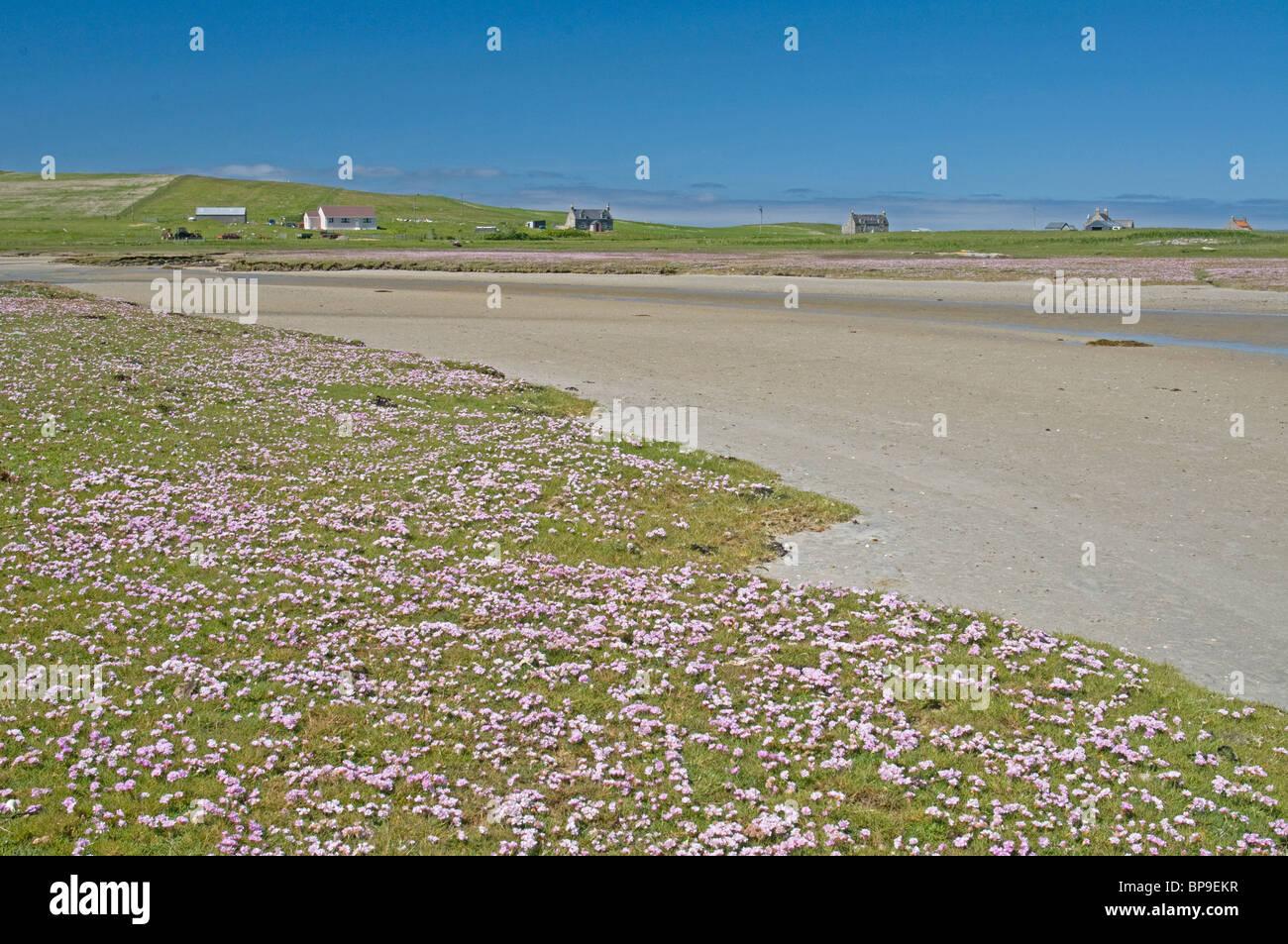 Machair in Summer, North Uist, Outer Hebrides, Western Isles, Scotland.  SCO 6362 - Stock Image