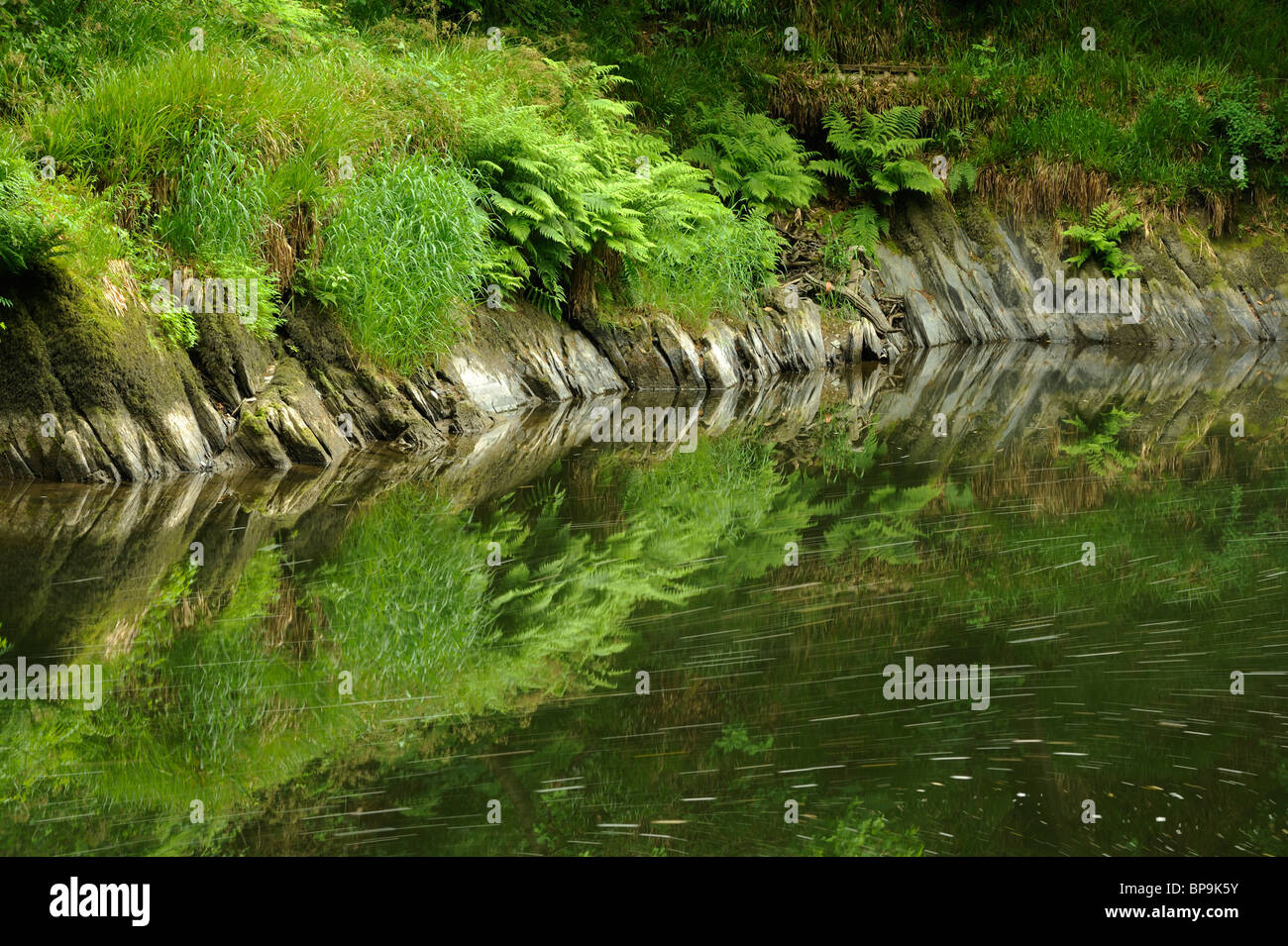 Clear reflections in the River Teifi near Cenarth, Carmarthenshire, Wales. Stock Photo