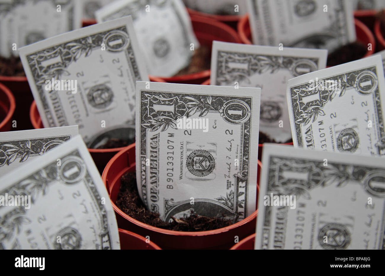 Toy US $1 dollar notes 'growing' in plant pots. - Stock Image