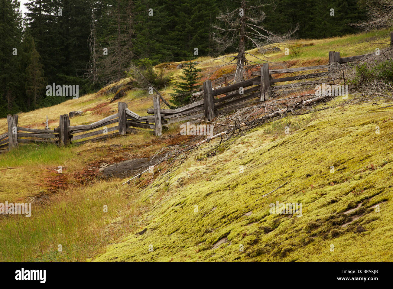 Split rail fence and moss covered rock. Box Canyon area. Mt Rainier National Park, Washington. - Stock Image