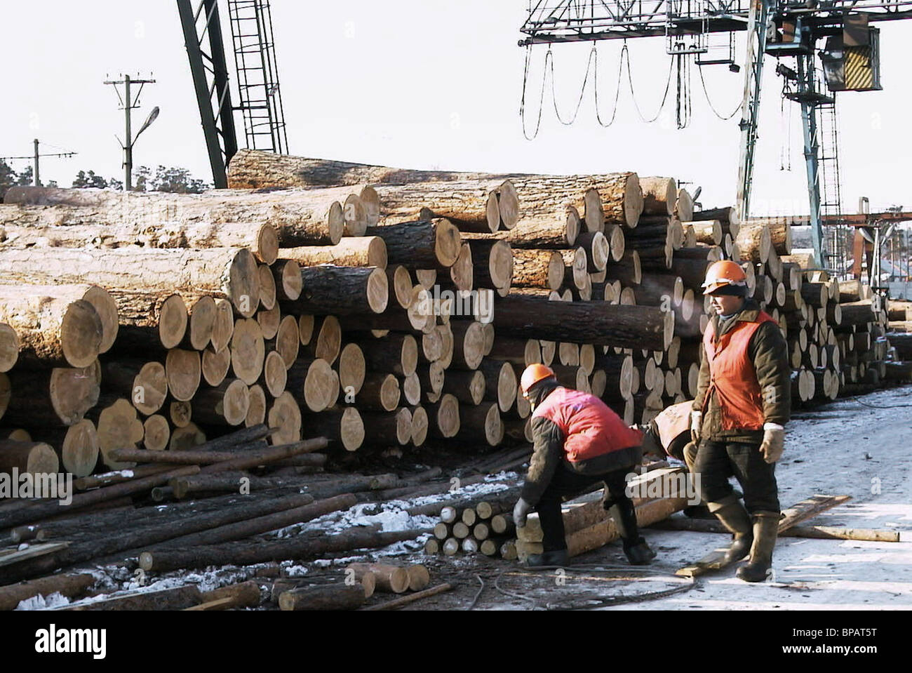 Siberian timber for shipment to China - Stock Image
