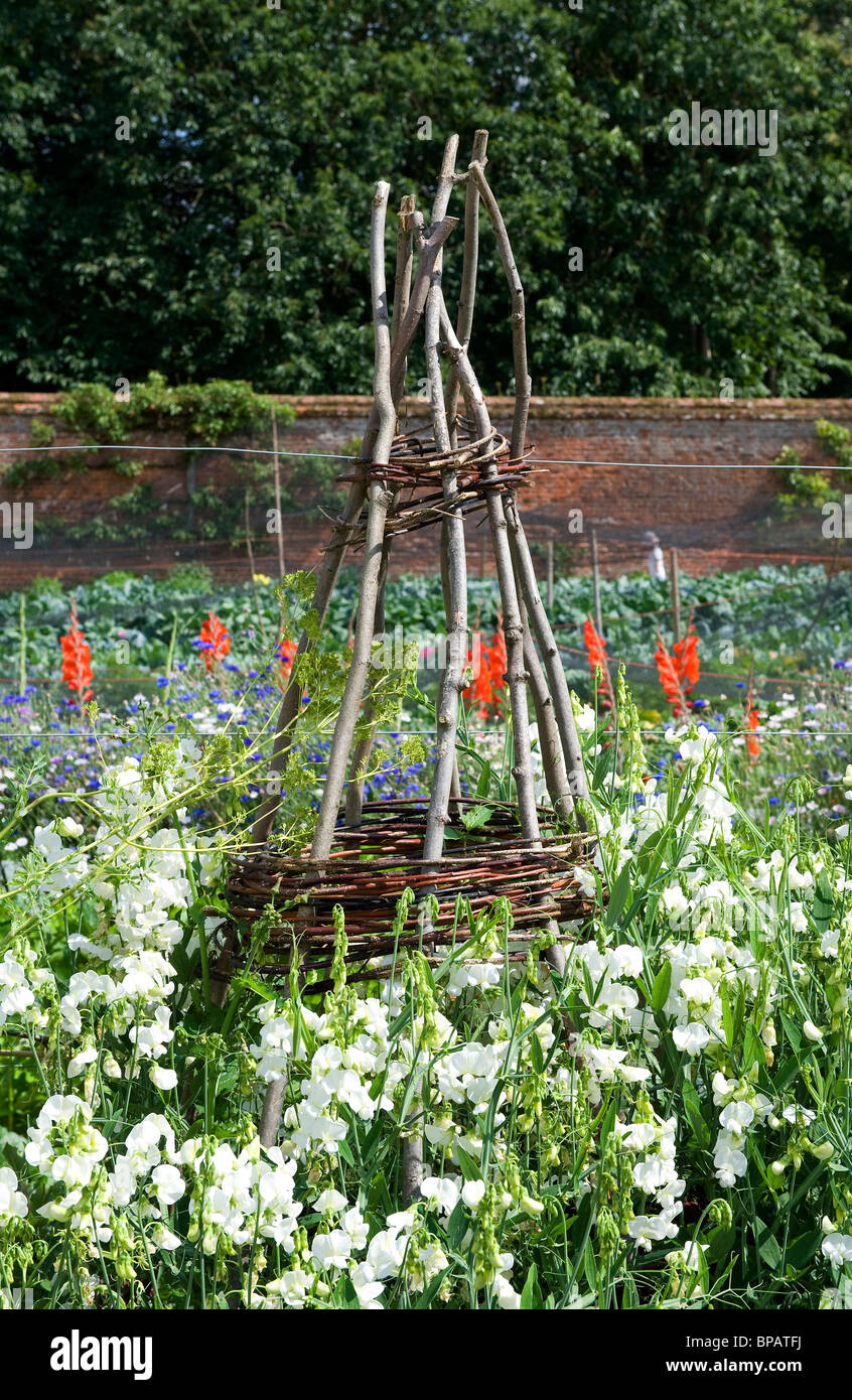 Merveilleux Plant Frame, Support Structure In Walled Garden   Stock Image