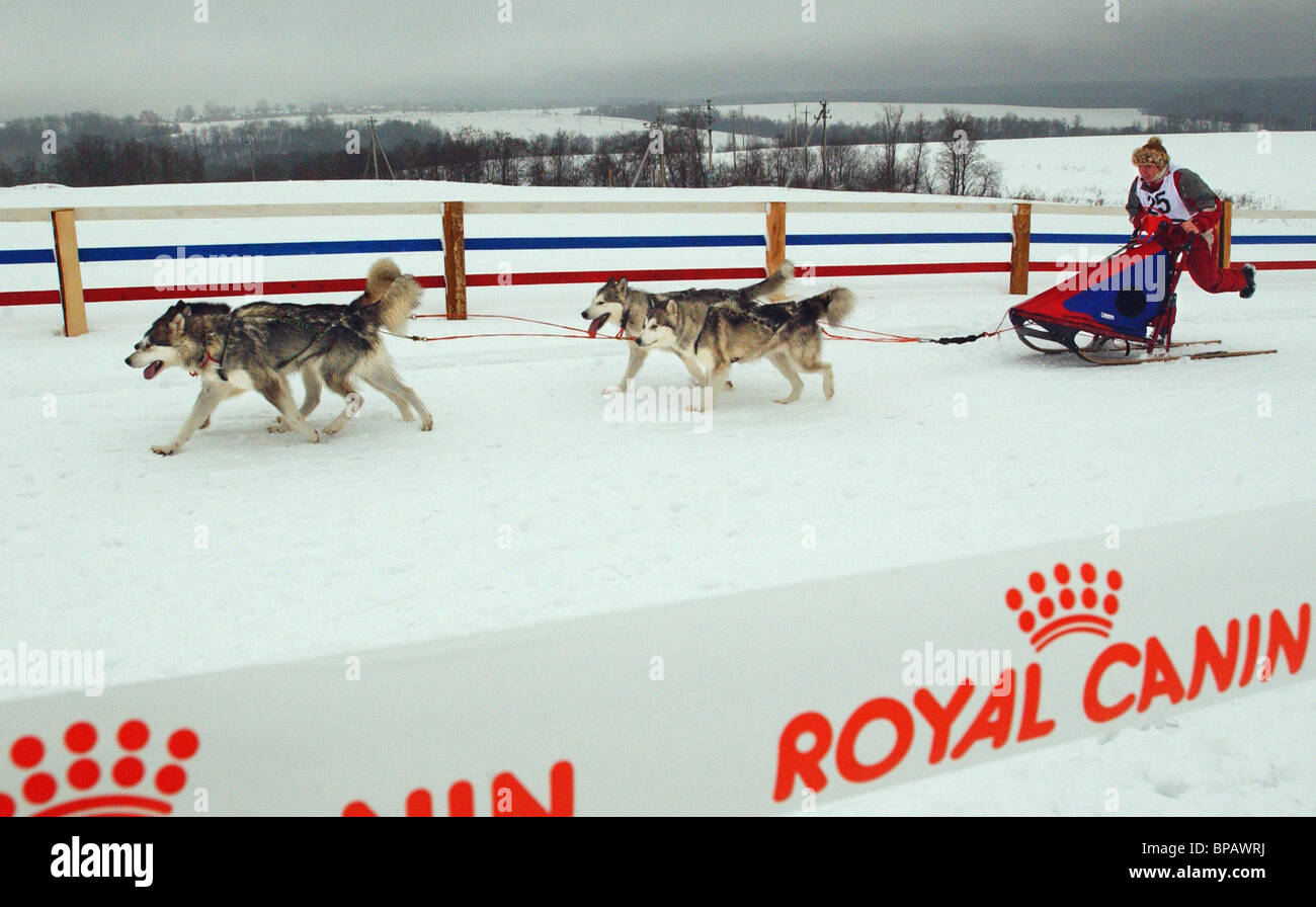 All-Russian Dog Sleigh Races in Yakhroma - Stock Image