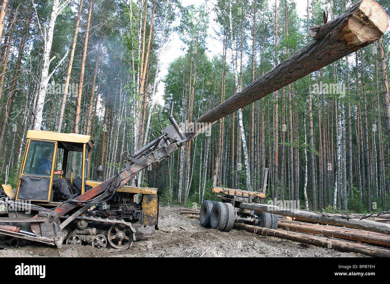 Russia's logging enterprises in operation - Stock Image