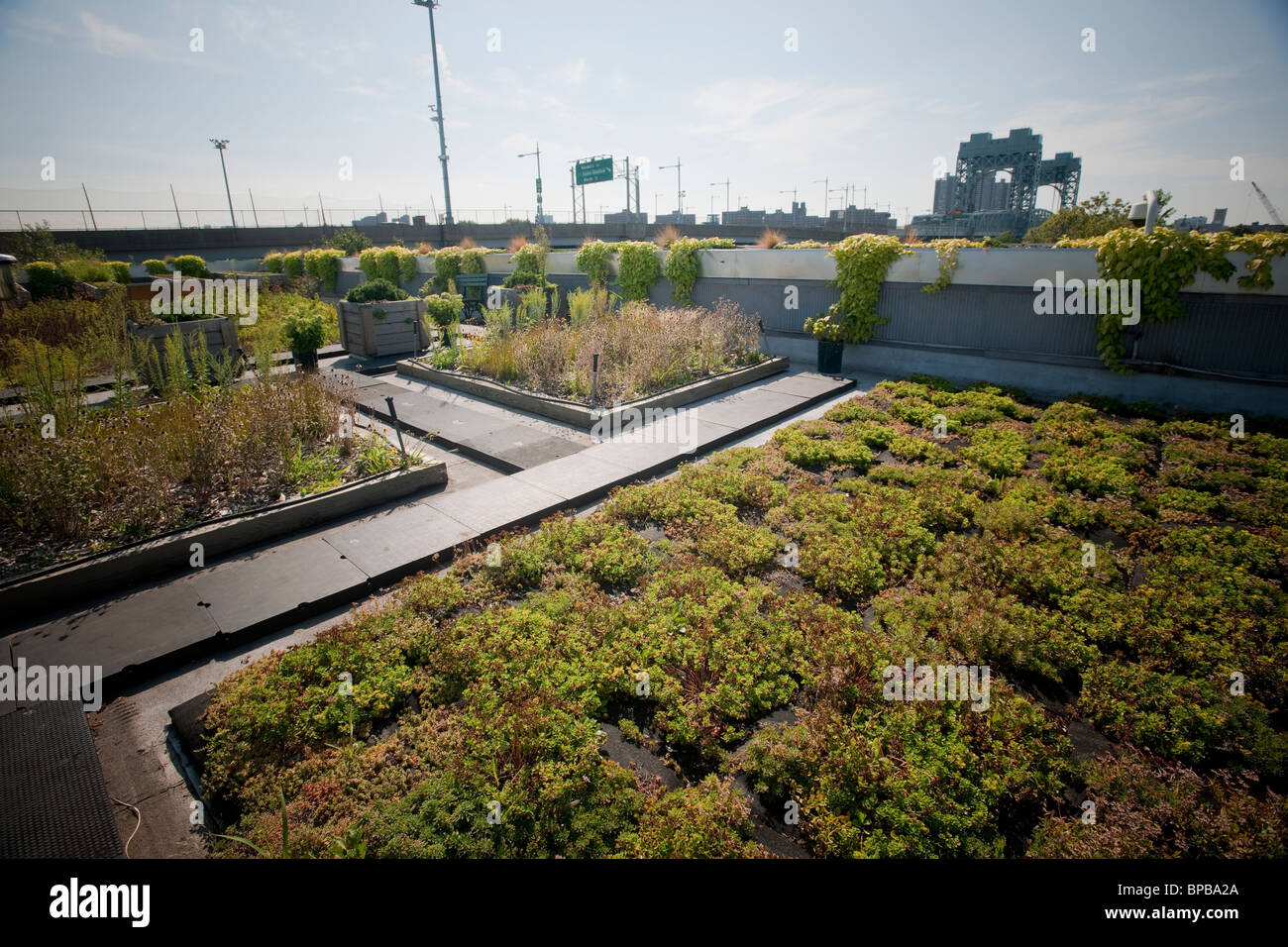 The 5 Boro Green Roof Garden on the NYC Parks and Recreation Dept. administration building on Randall's Island - Stock Image
