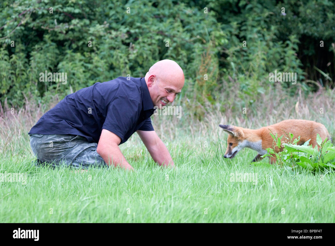 Fox Cub; Vulpes vulpes; male with handler; Gary Zammit - Stock Image