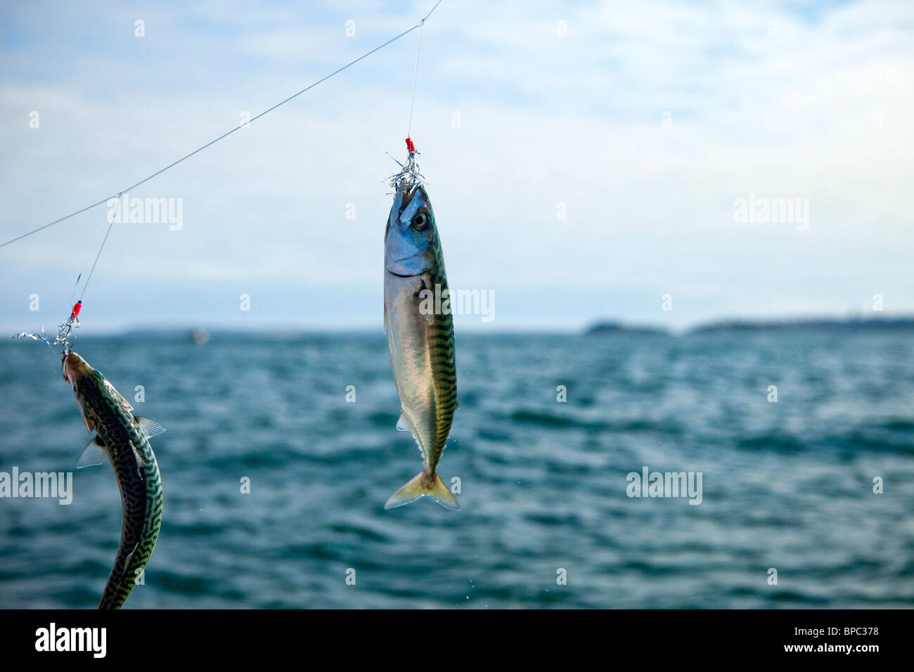 Mackerel Fishing off North Beach, Tenby,Pembrokeshire West Wales UK - Stock Image