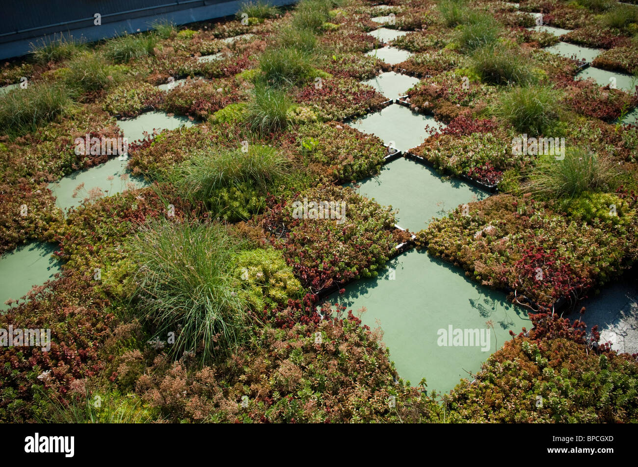 Green Roof Garden on the roof of the NYC Parks and Recreation Dept. administration building on Randall's Island - Stock Image
