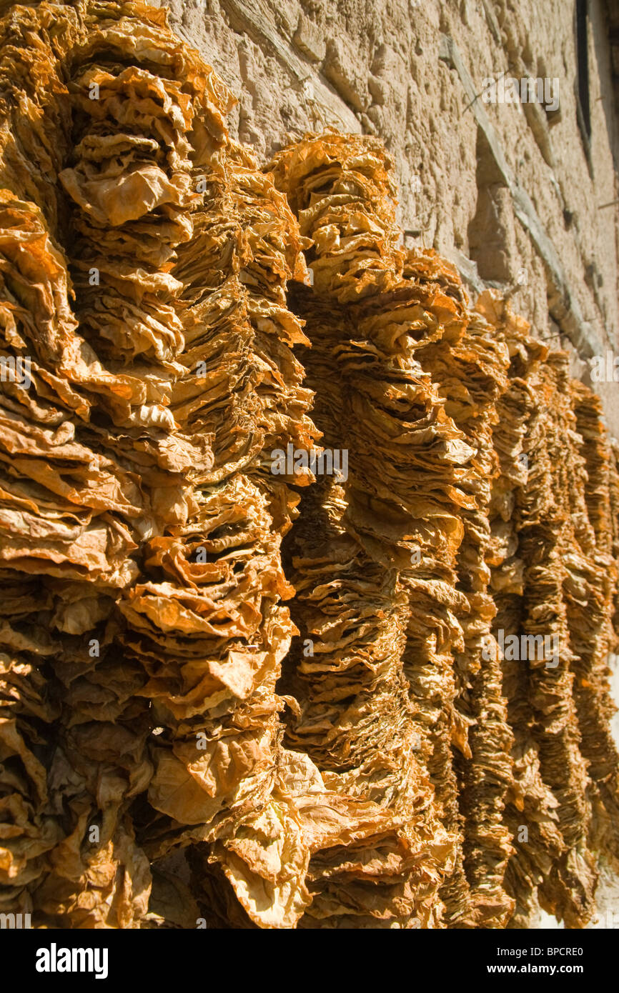 Mandritza village, Ivailovgrad region, Tobacco leaves hanged to dry, old Bulgarian house, Balkans, Bulgaria - Stock Image