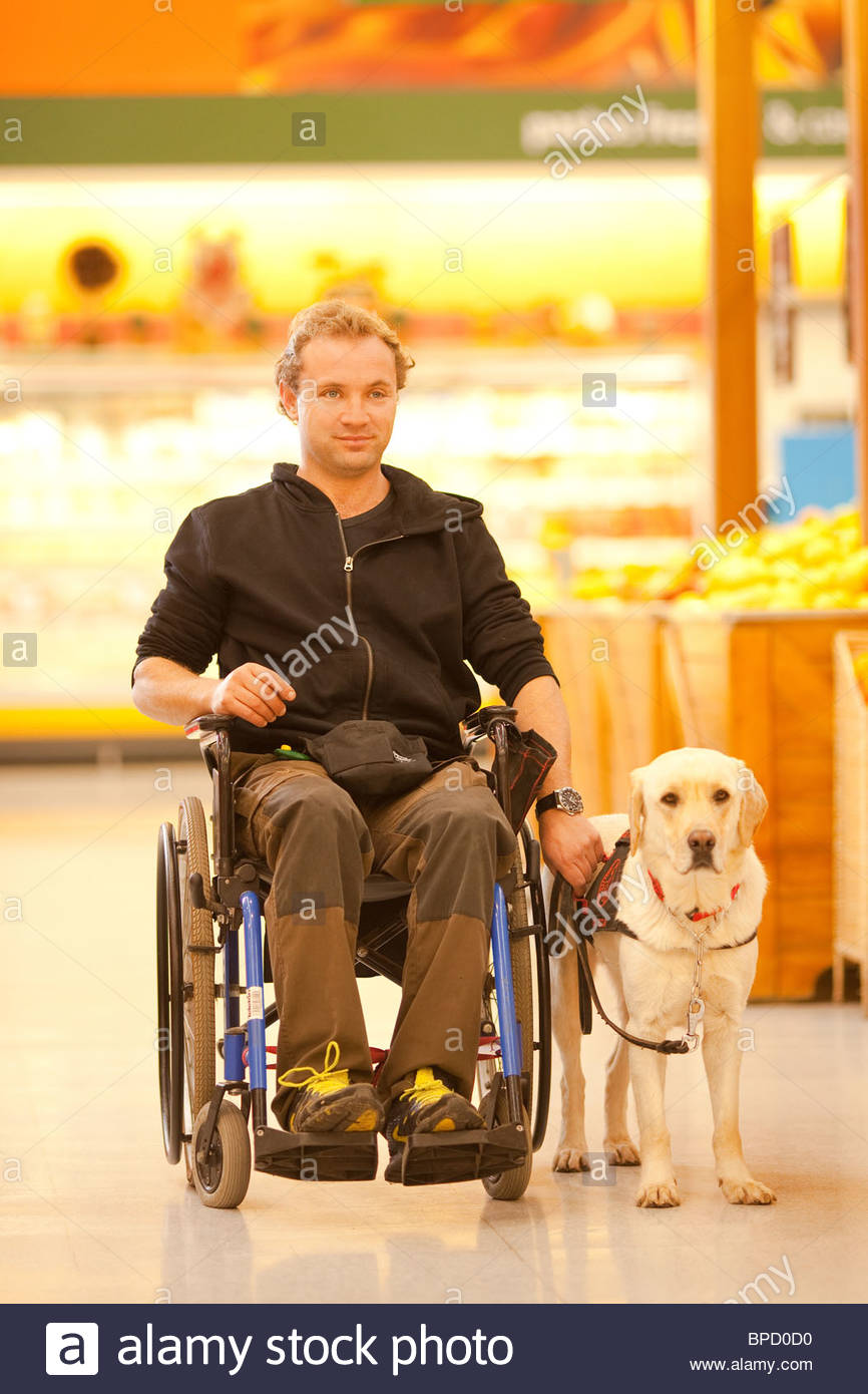 Man in wheelchair with the assistance of a trained dog at a supermarket - Stock Image