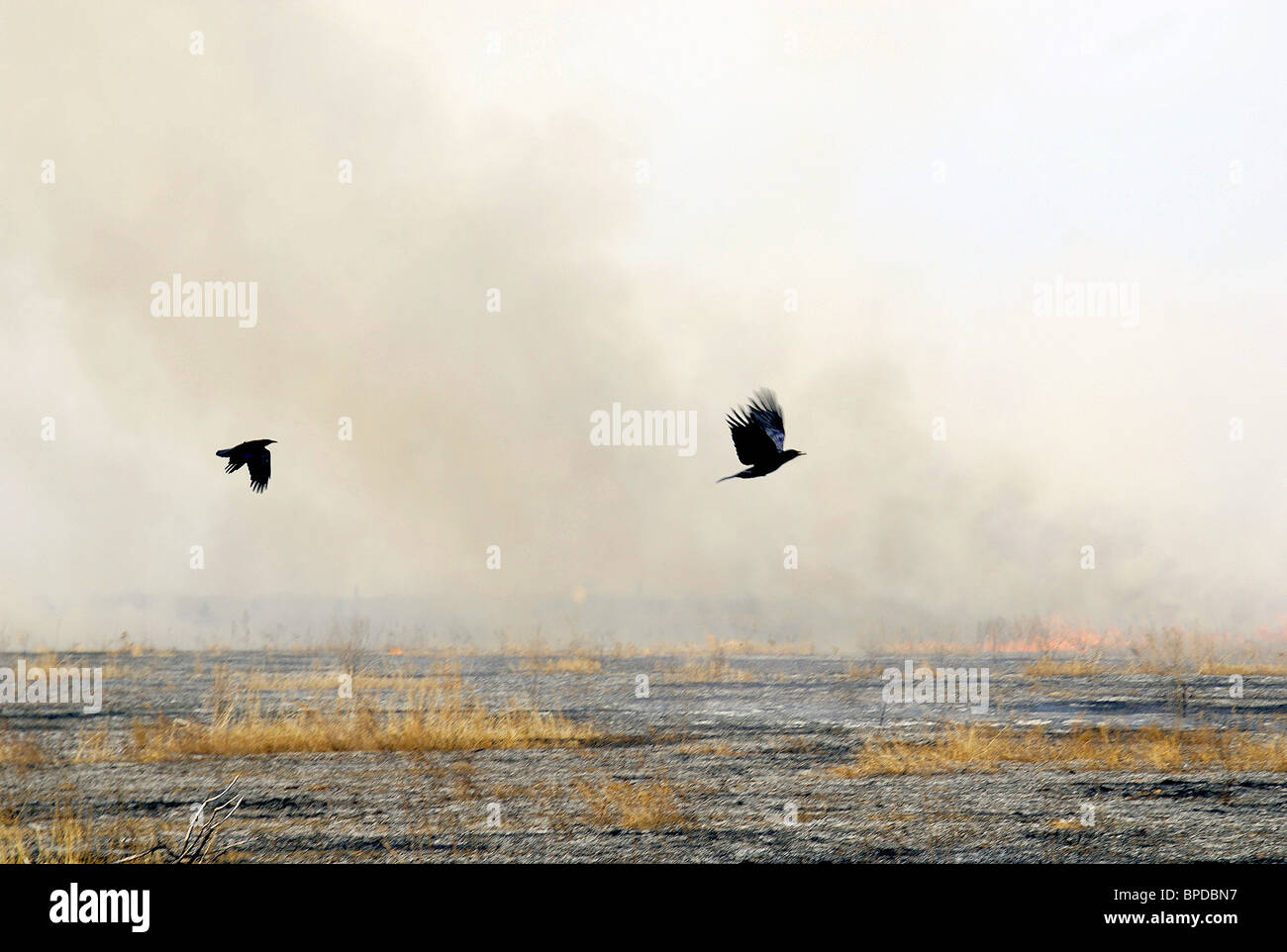 Unique part of Khakassia nature reserve completely destroyed by fire - Stock Image