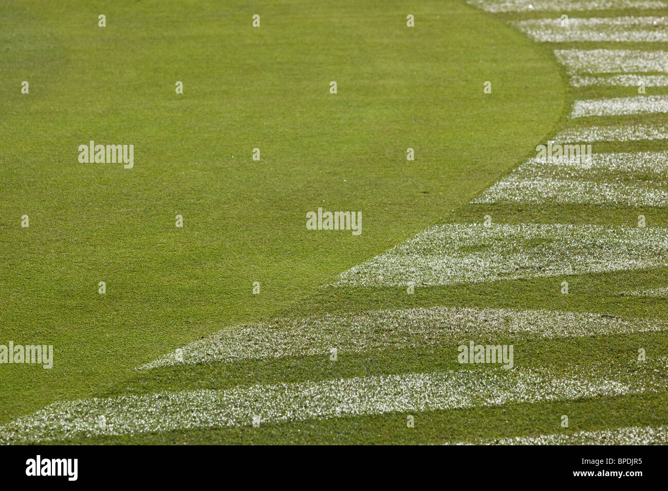 Golf green with tracks in the dew around the edge - Stock Image