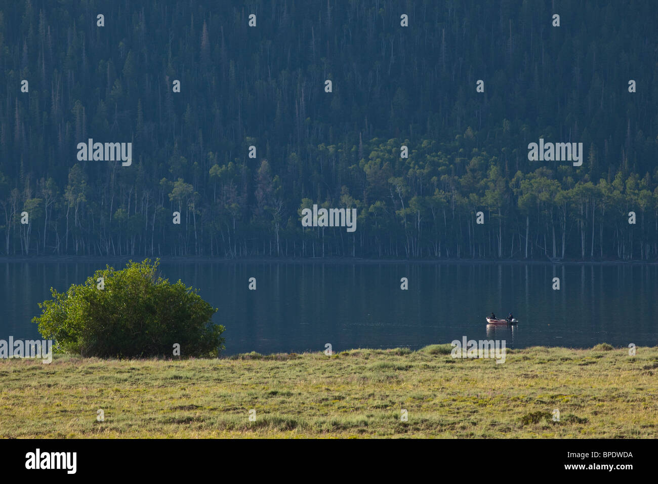 Fishermen boating on Fish Lake, still morning at Fishlake National Forest, Utah, USA - Stock Image