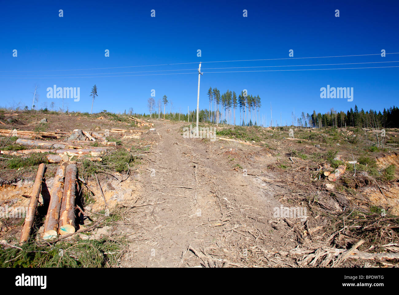 Forest harvester tracks leading to a Finnish clearcutting area in the forest , Finland - Stock Image