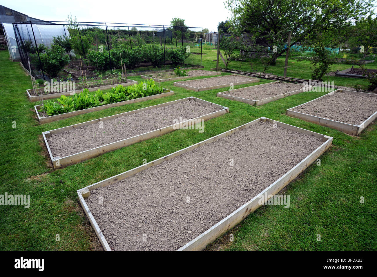 Neat and tidy raised gowing beds on an allotment in sussex - Stock Image