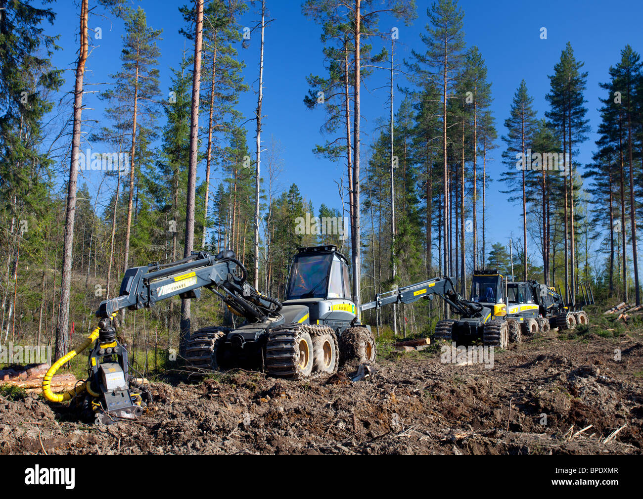 Ponsse Buffalo forwarder and Beaver forest harvester at clear-cutting area , Finland - Stock Image