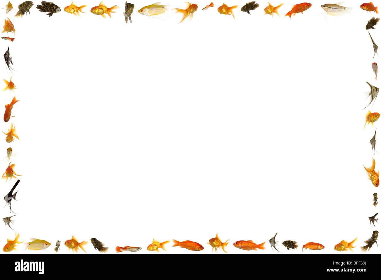 Fish frame isolated on white background. Many different freshwater ...