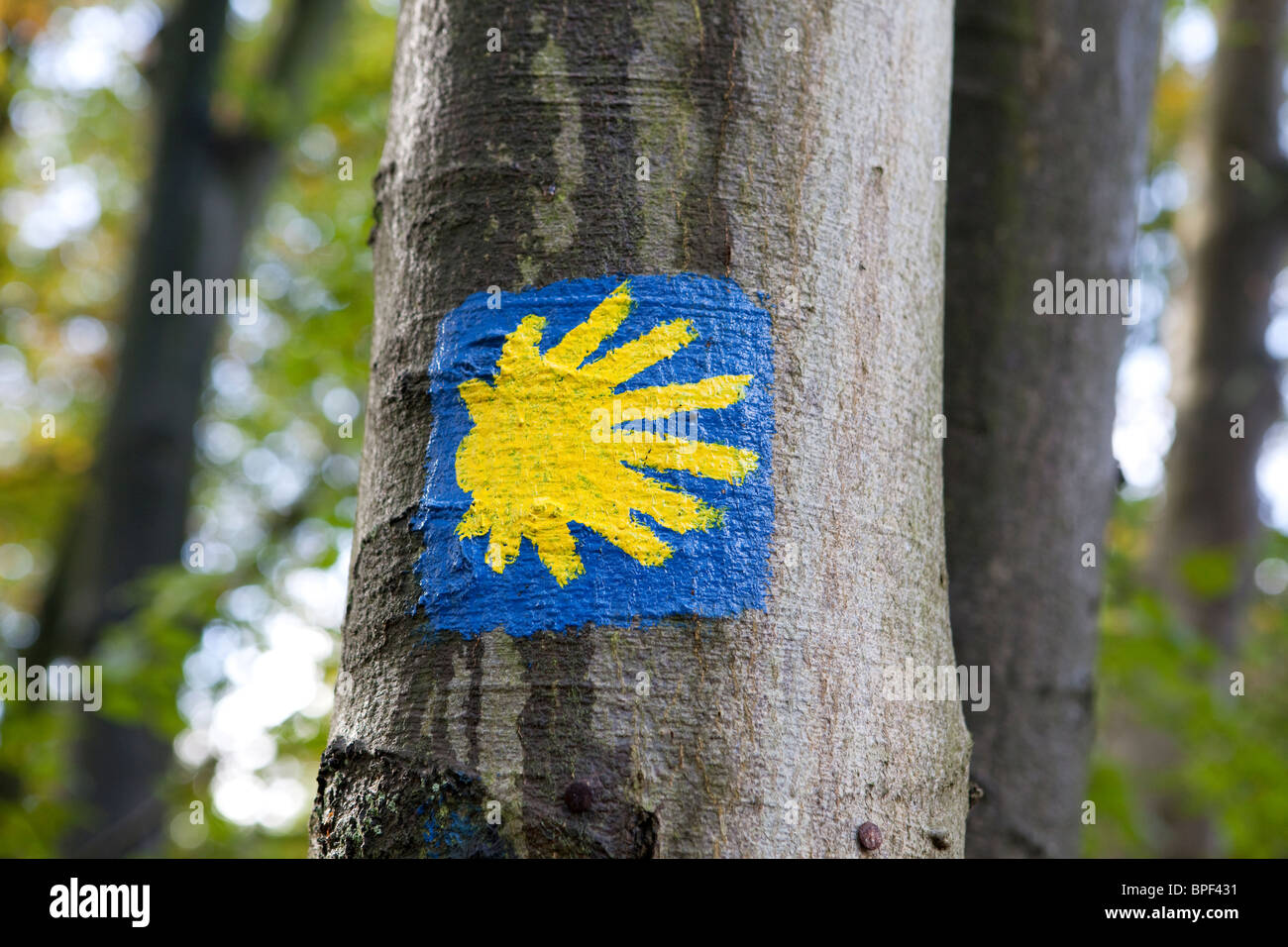 the sign of the Camino de Santiago trail on a tree - Stock Image