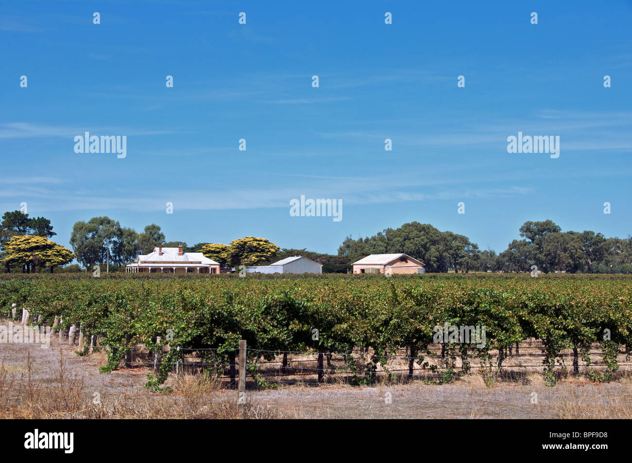 Vineyard and colonial homestead Langhorne Creek South Australia - Stock Image