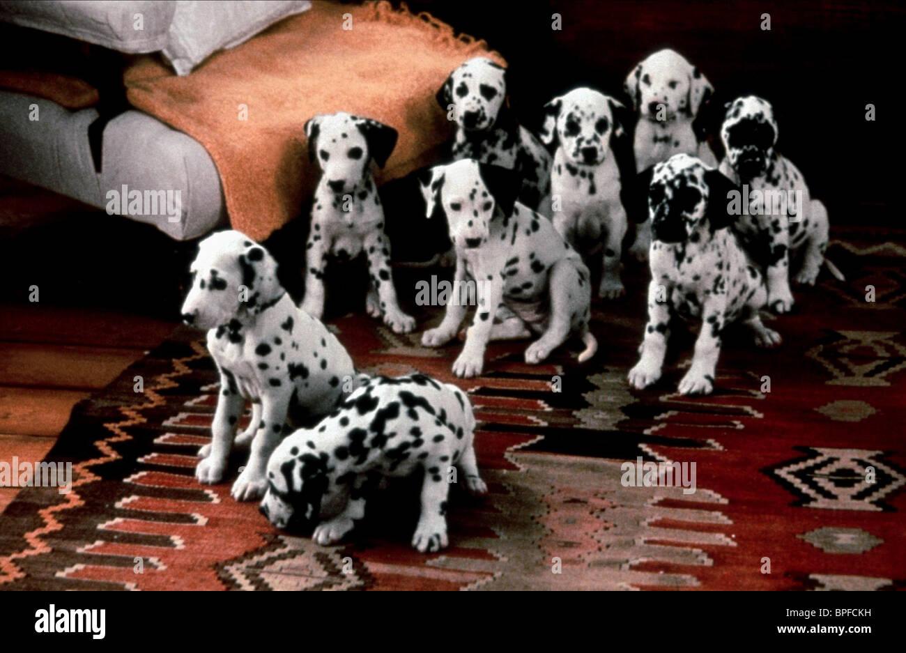 Dalmatian Puppies 101 Dalmatians 1996 Stock Photo Alamy