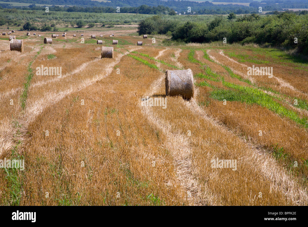 bale of the straw on the acre - Stock Image