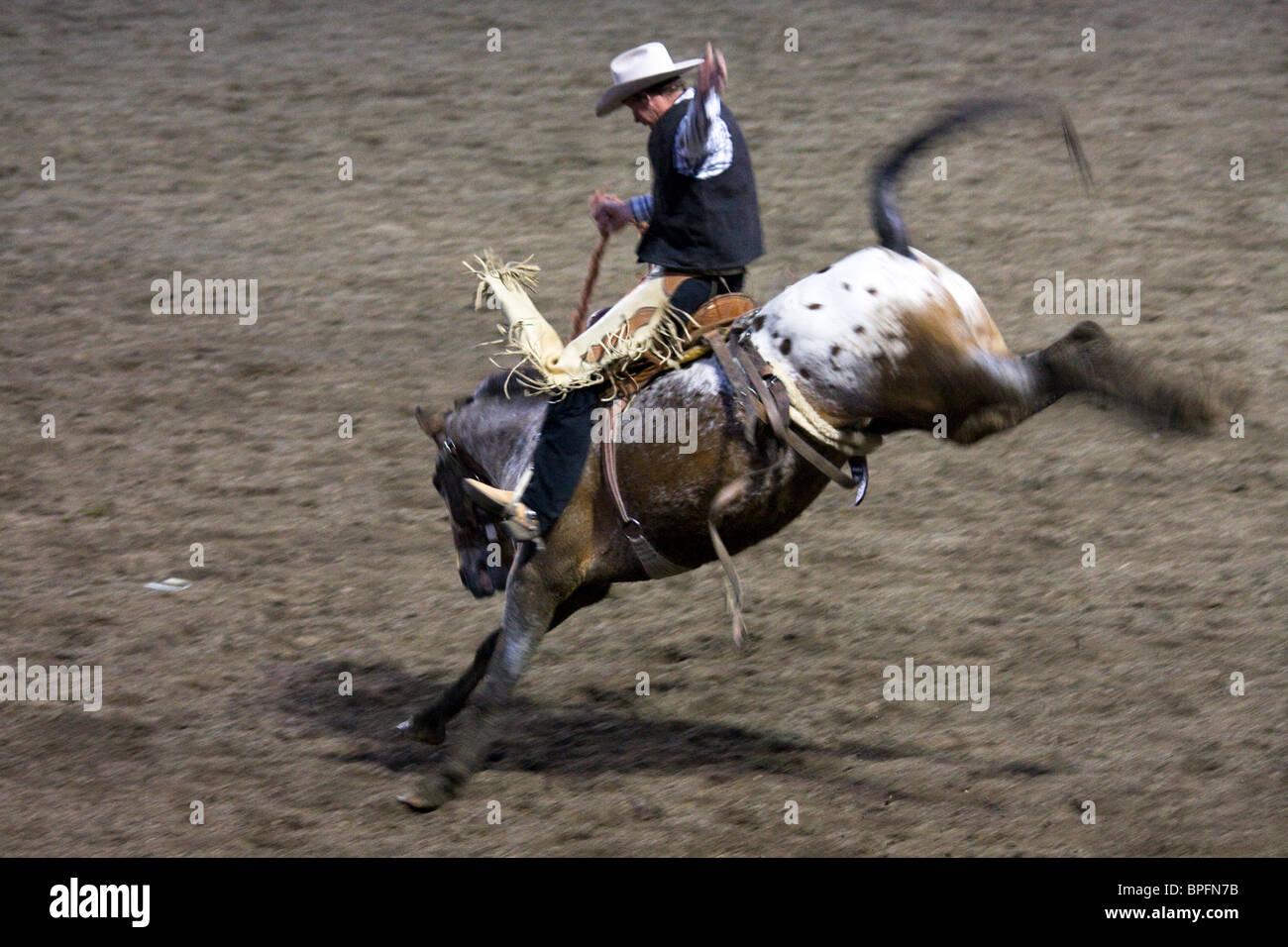 Bucking bronco, Cody Nite Rodeo, Wyoming, USA - Stock Image