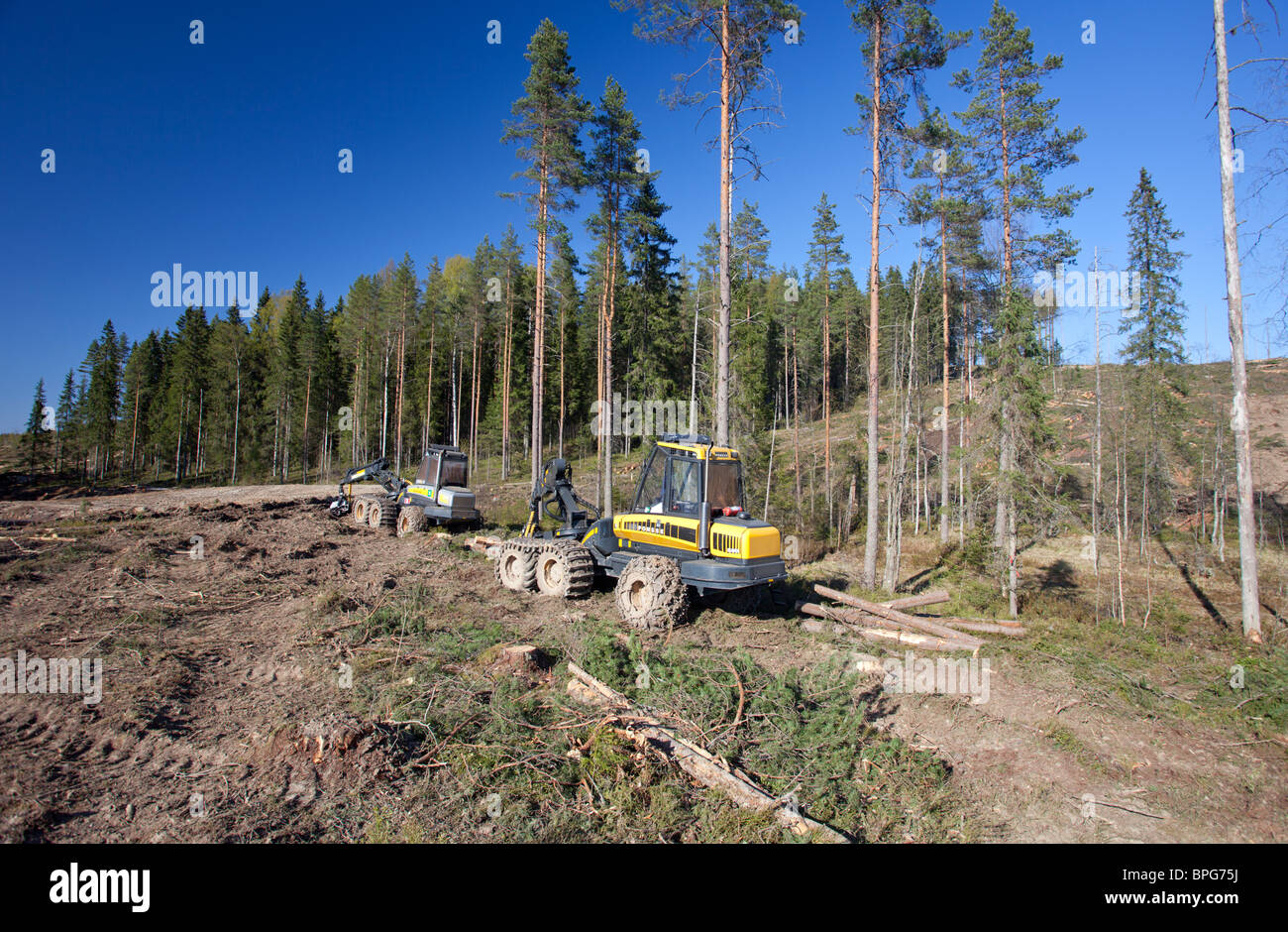Ponsse Buffalo forwarder and Buffalo forest harvester at clear-cutting area , Finland - Stock Image