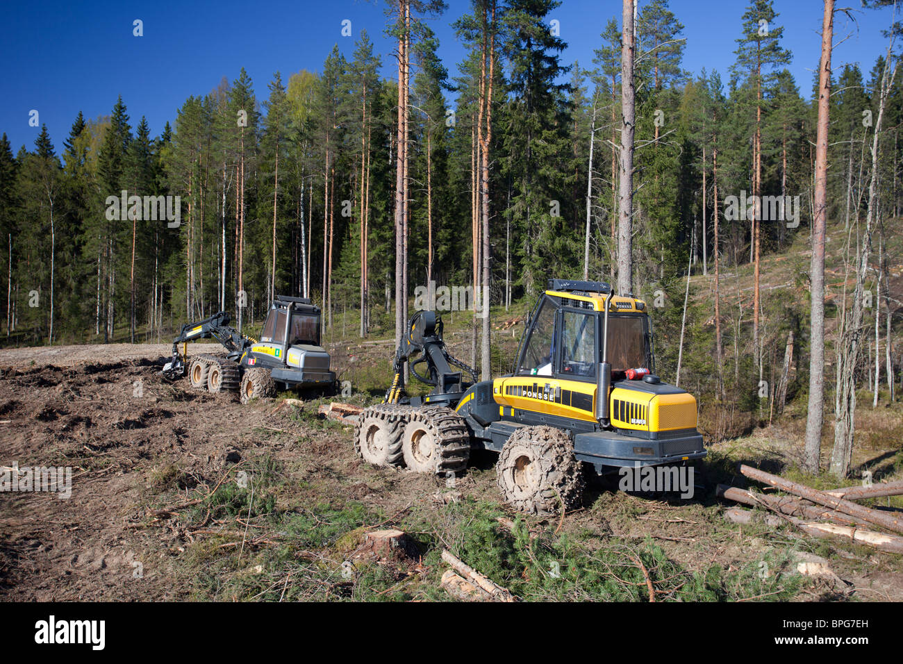 Ponsse Buffalo forwarder and Ponsse Beaver forest harvester at clear-cutting area , Finland Stock Photo