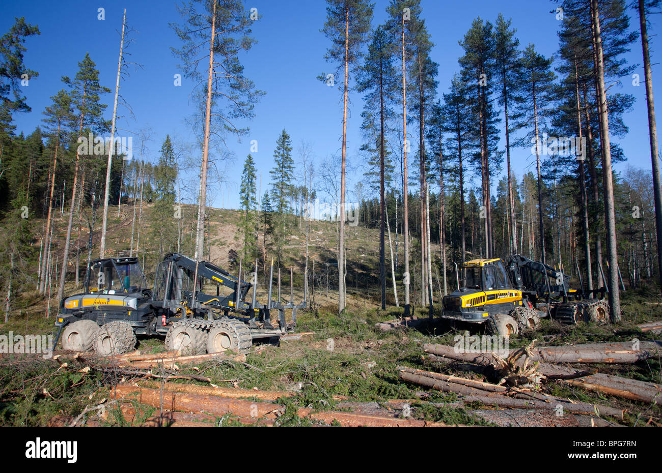 Ponsse Buffalo forest harvester and forwarders at clear-cutting area , Finland - Stock Image