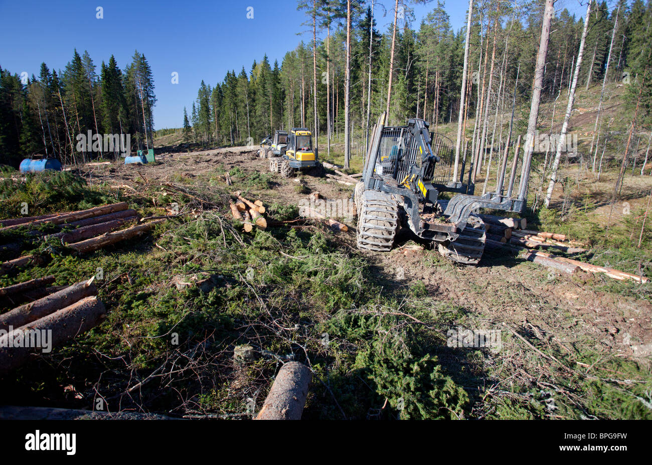 Ponsse Buffalo forwarder and Beaver forest harvester at clear cutting area , containing mainly pines and spruces - Stock Image