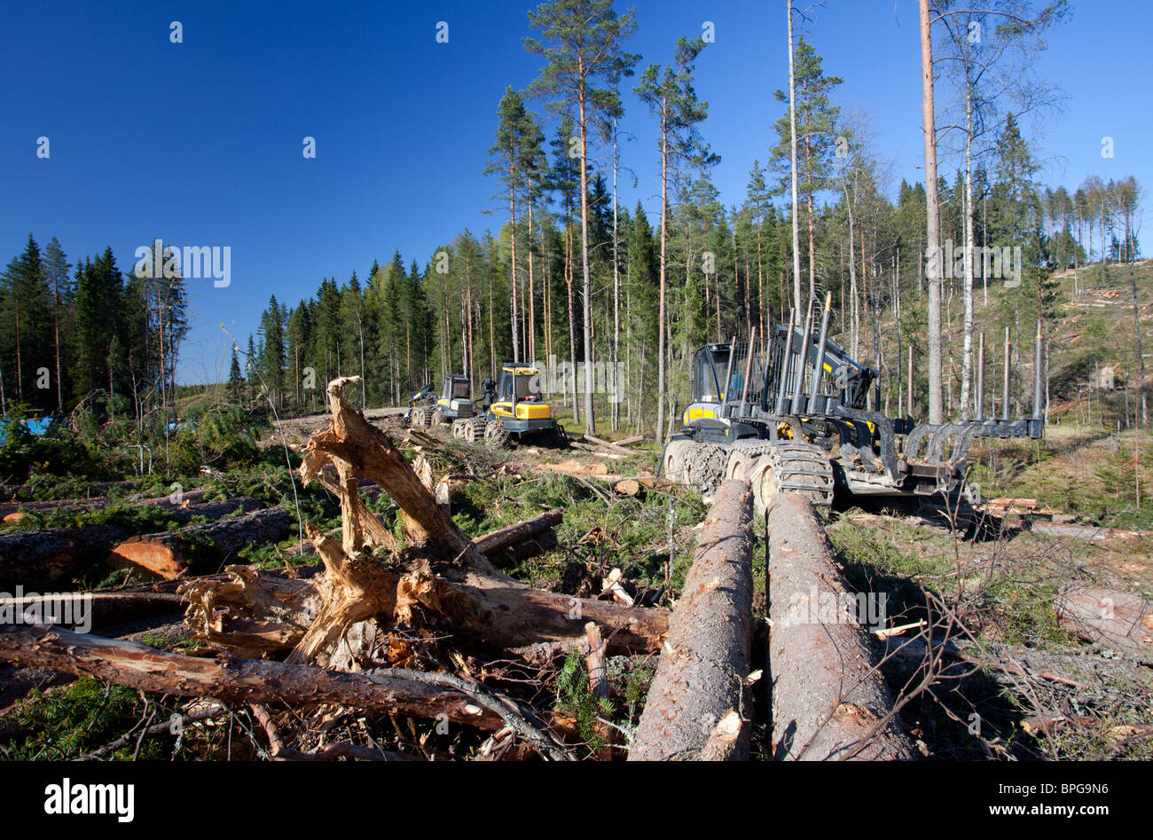 Ponsse Buffalo forwarder forestry vehicle at clear-cutting area , Finland - Stock Image