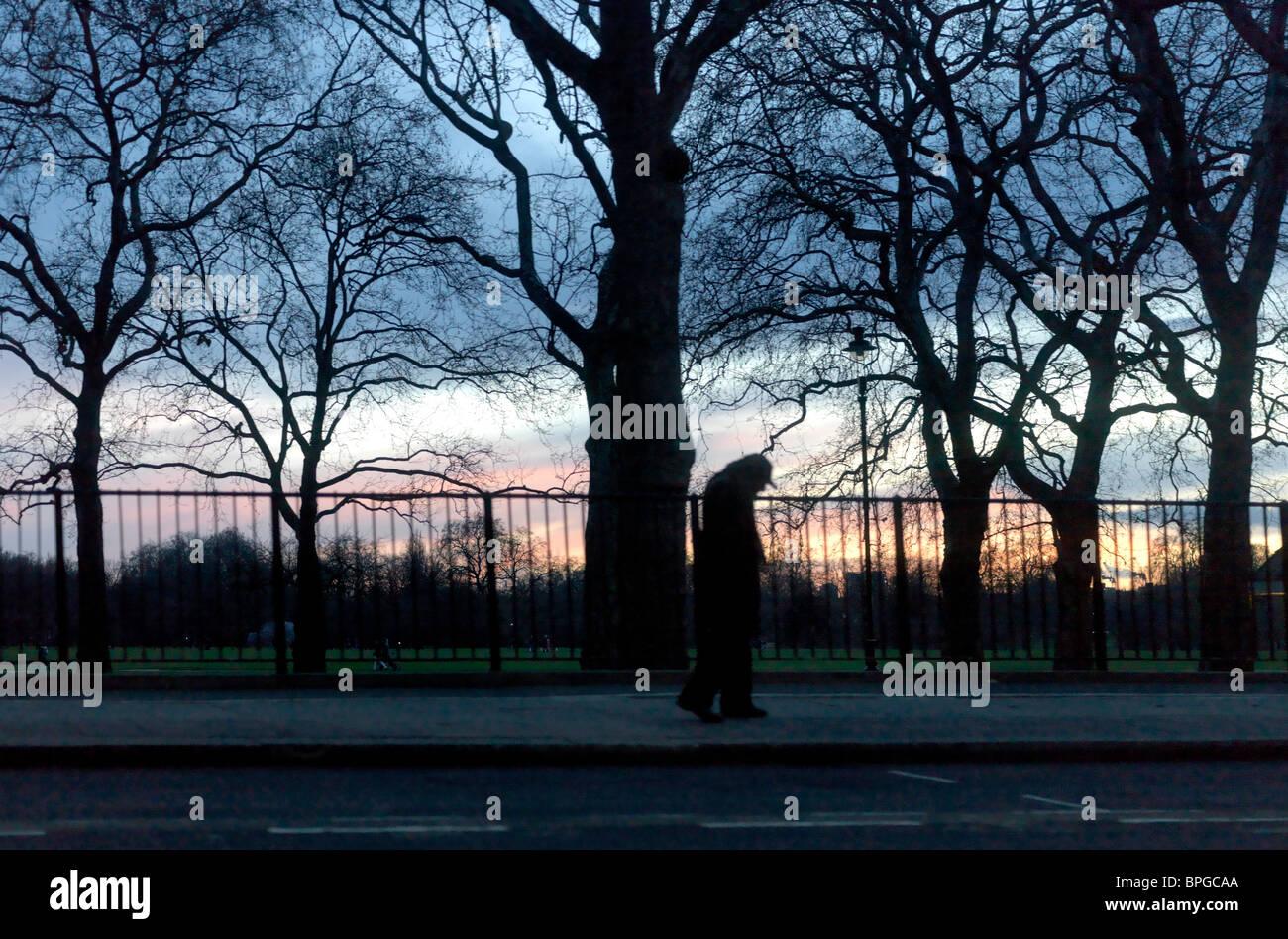 London England London Embankment Trees At Sunset - Stock Image