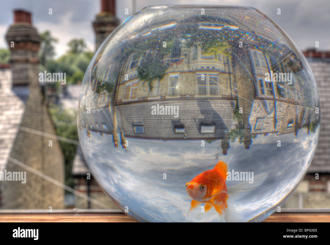 HDR image of a goldfish in a goldfish bowl, overlooking the back streets of Cambridge. - Stock Image