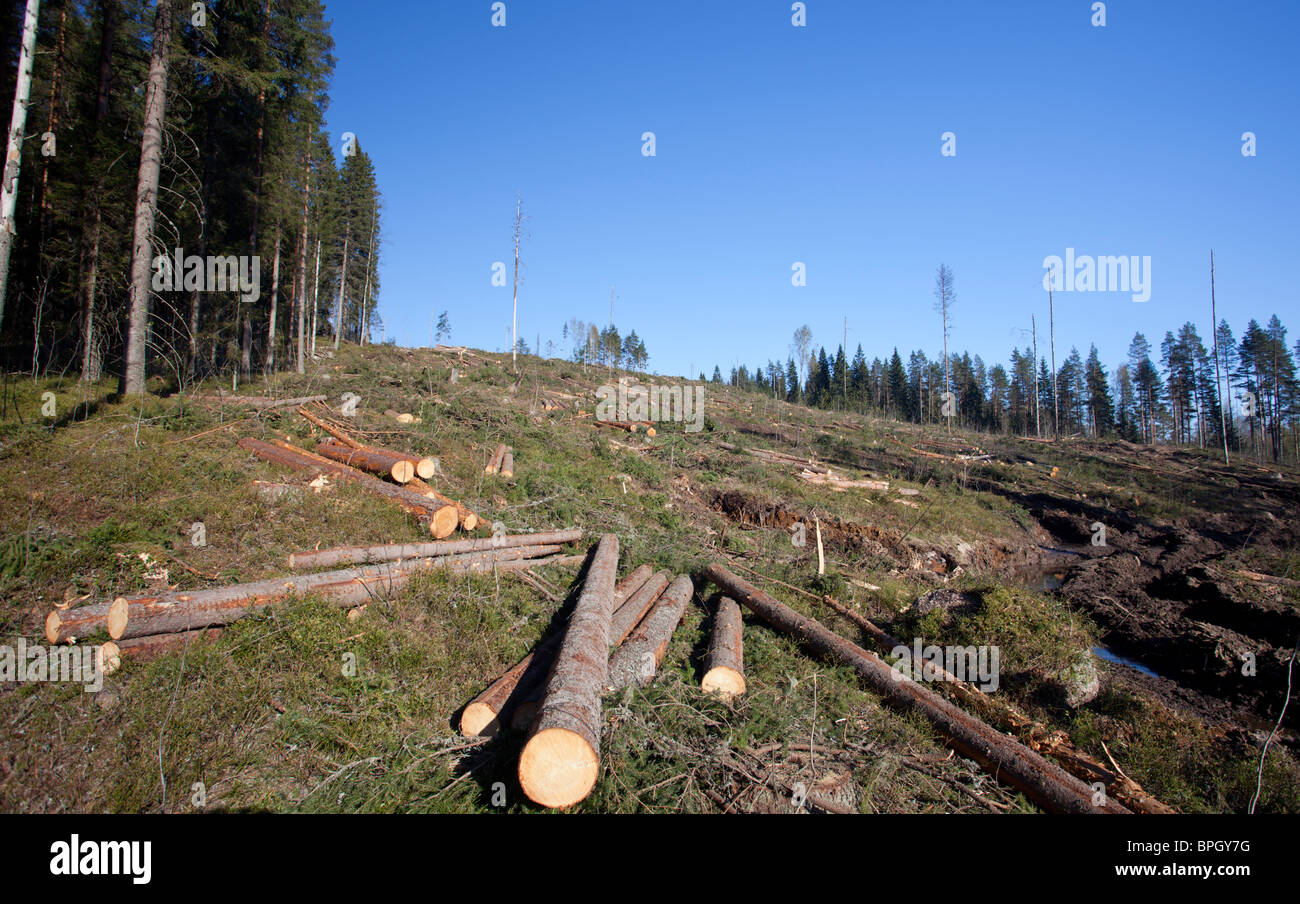 Spruce logs at Finnish clear cutting area , Finland - Stock Image