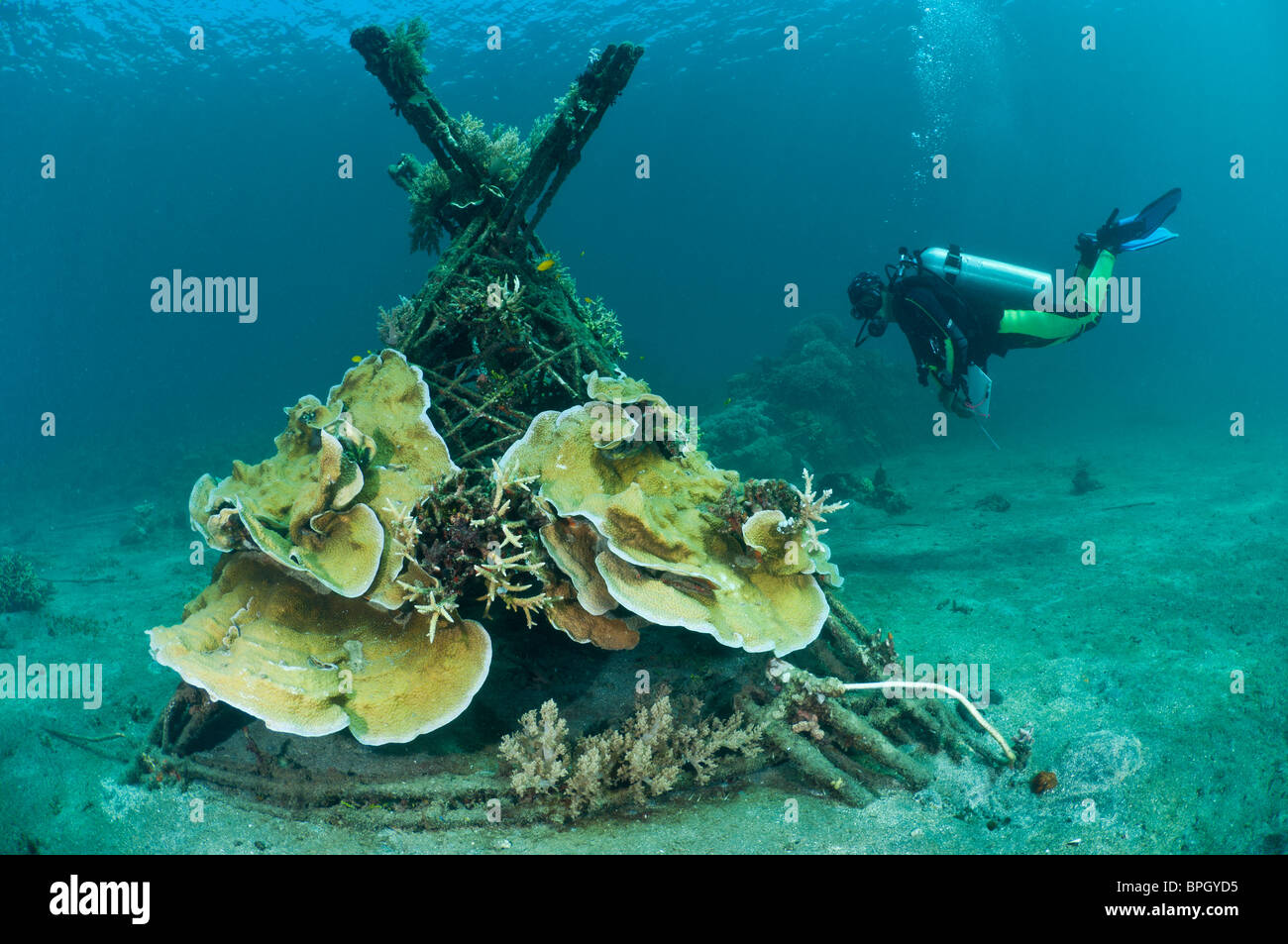 A diver examining a Biorock structure, Pemuteran, Bali, Indonesia. Stock Photo