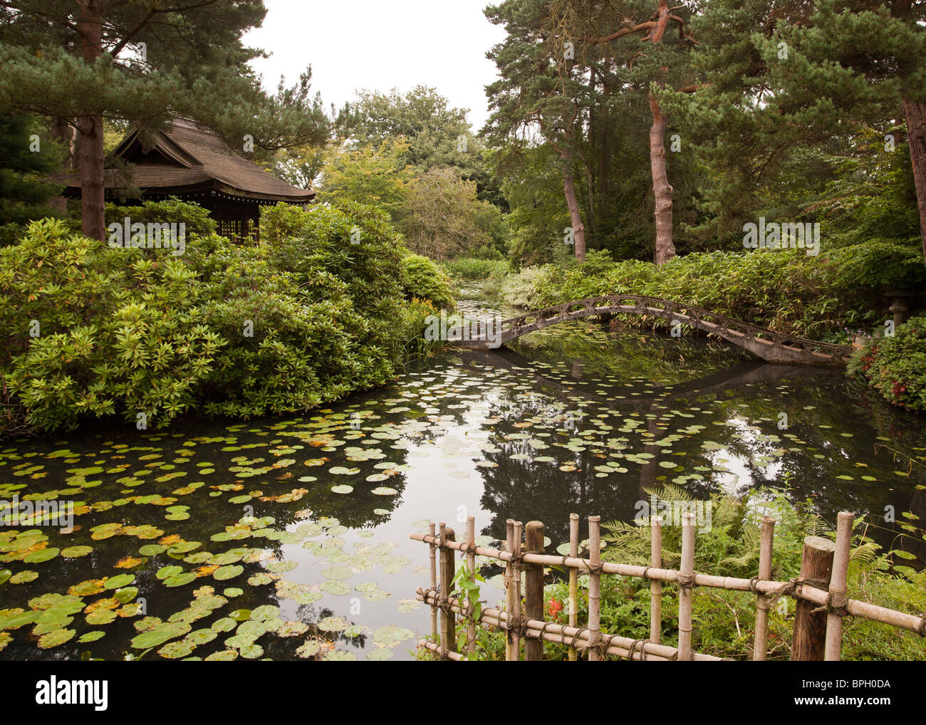 Amazing Lotus Garden Bloomington Composition - Brown Nature Garden ...