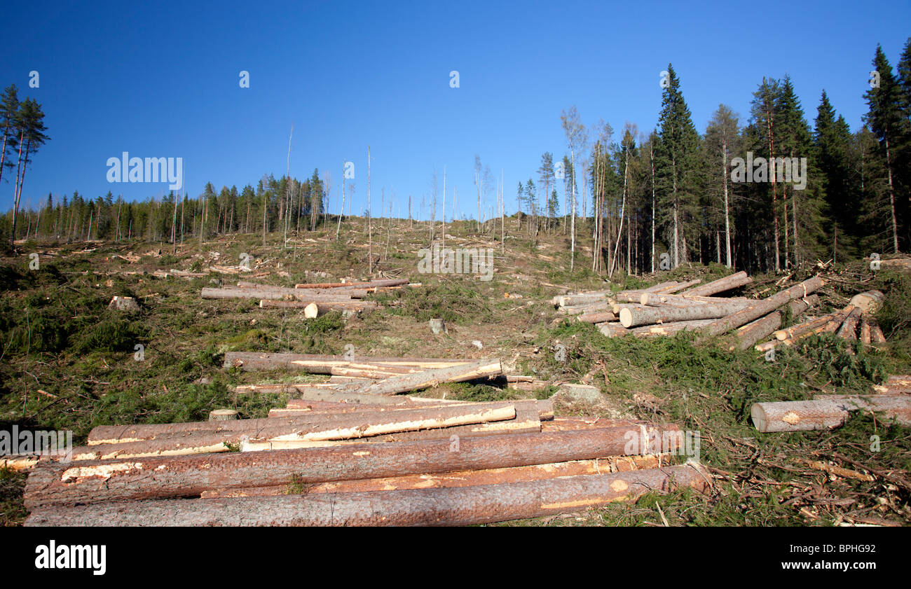 Logging the forest has produced pine and spruce logs at clear cutting area , Finland - Stock Image