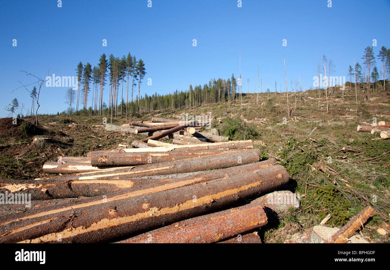 Pine and spruce logs at Finnish clear cutting area , Finland - Stock Image