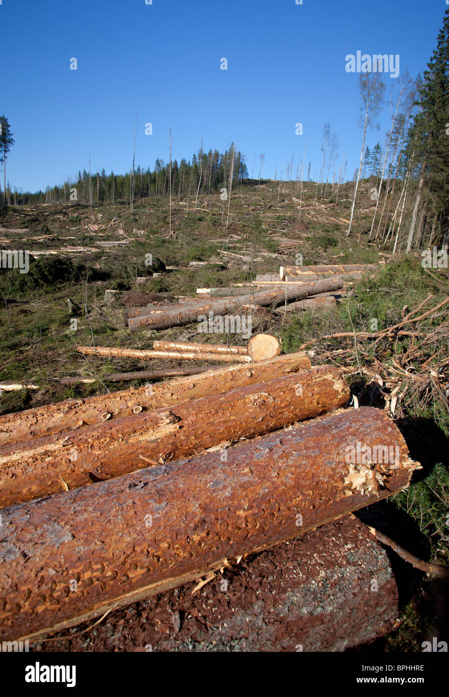 Pine ( pinus sylvestris ) logs at Finnish clearcutting area , Finland - Stock Image